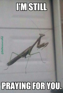Praying Mantis.jpeg